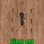 Скриншот Ant Smasher – Изображение 3