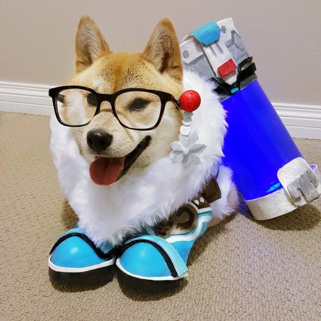 Сногсшибательный собакосплей Overwatch . - Изображение 9