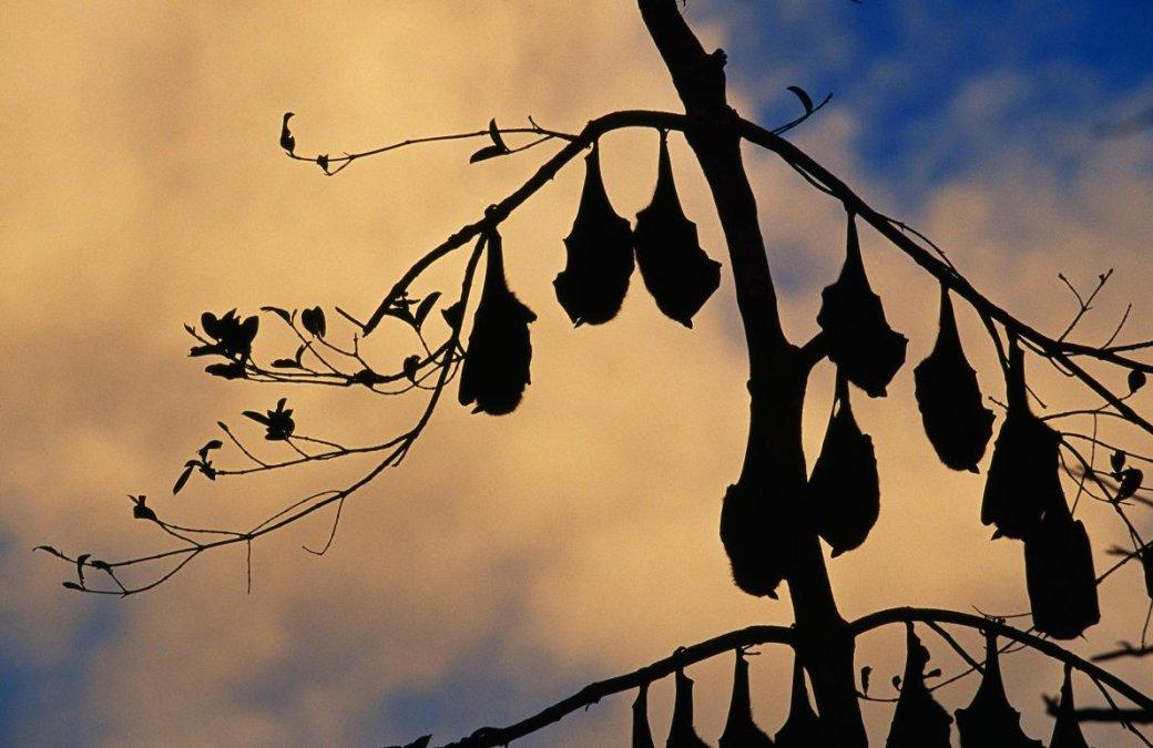 Хэллоуин еще некончился: лучшие фотографии летучих мышей отNatGeo - Изображение 10