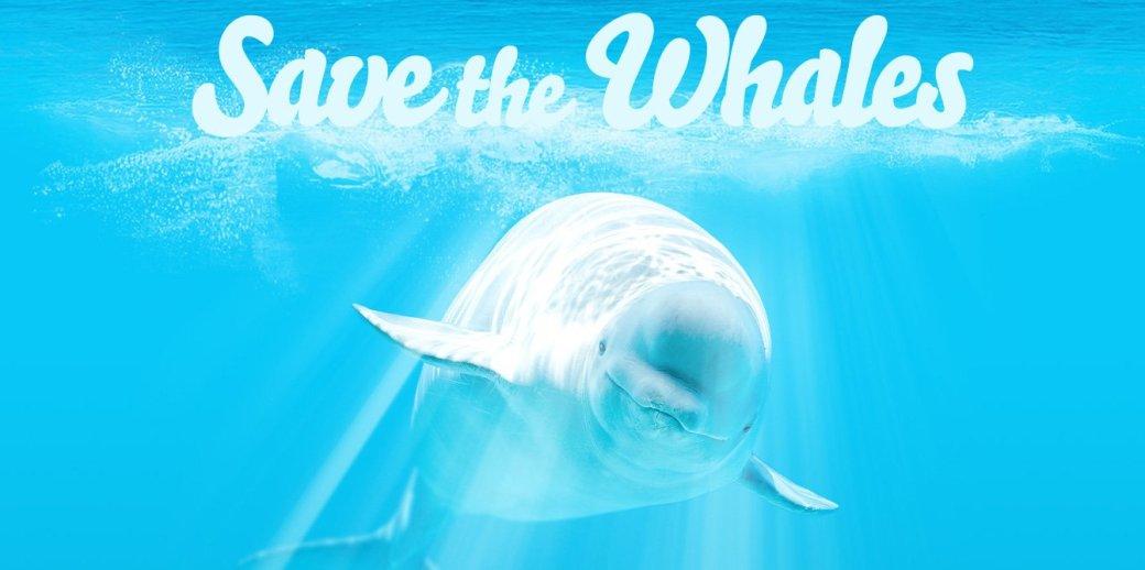 Портал для взрослых оправдывает просмотр порно спасением китов - Изображение 1