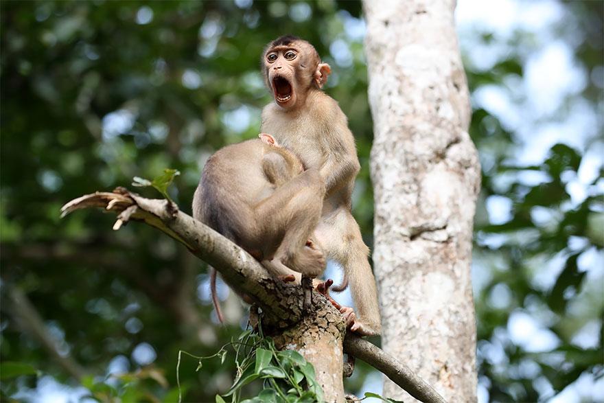 Позитивная галерея: 40 фото сконкурса насамый смешной снимок дикой природы   Канобу - Изображение 3987