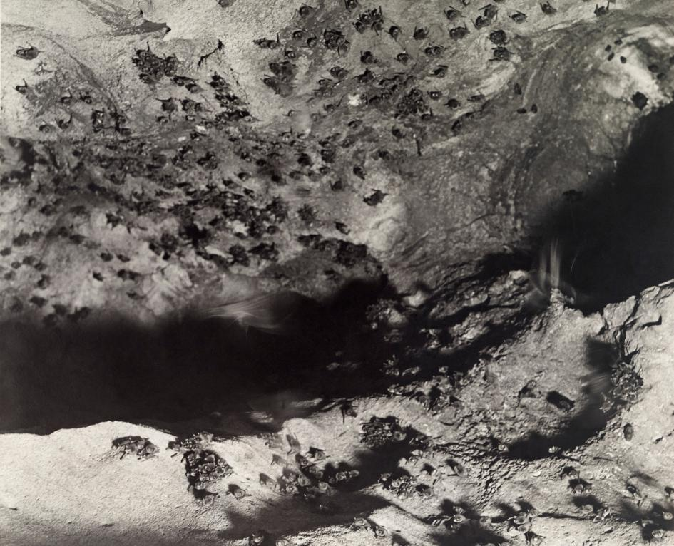 Хэллоуин еще некончился: лучшие фотографии летучих мышей отNatGeo | Канобу - Изображение 4685