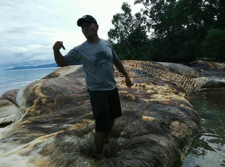 Что запокемон? Туша огромного морского животного пугает индонезийцев   Канобу - Изображение 1
